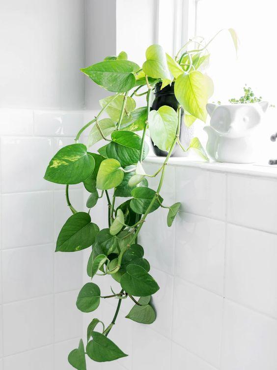 easy house plant