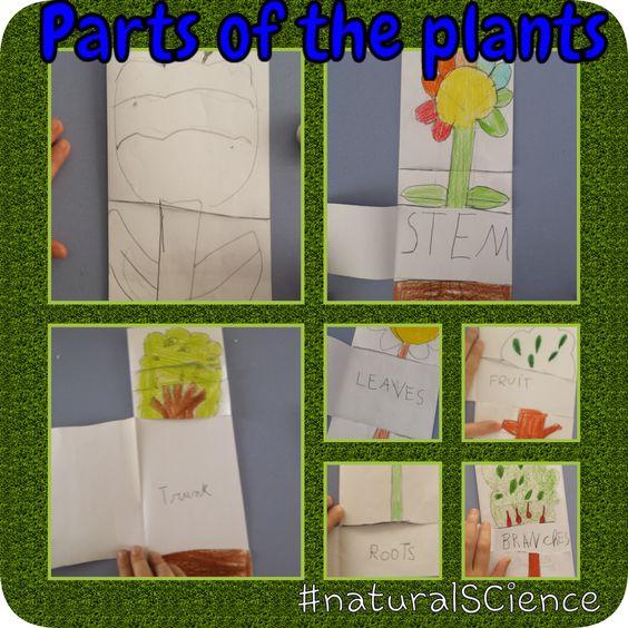 Aprendemos las partes de la flor y del árbol a través de una actividad de etiquetado, personalizada y motivadora para los niños. 1º EP. Natural science