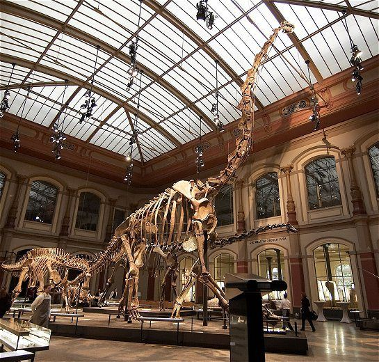 Sauropode0401