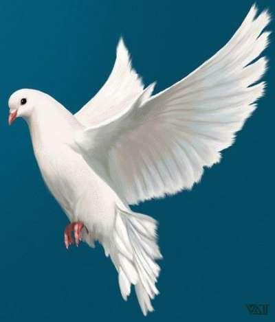New white bird flying peace 17 Ideas #bird
