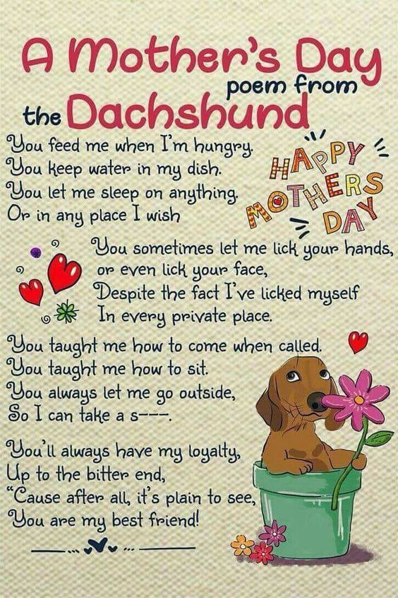 Pin By Belle Amore Dachshunds On Just Dachshunds Dachshund