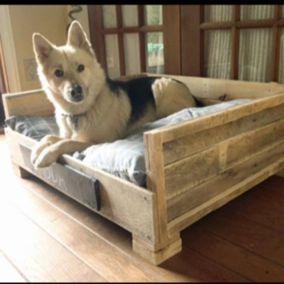 A bed for Ellwood...maybe he won't eat this one.