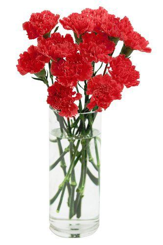 Red Carnation Bouquet (12 Stems) - With Vase - http://flowersnhoney.com/red-carnation-bouquet-12-stems-with-vase/: