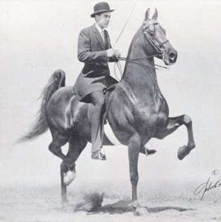 The American Saddlebred1956 Valley View Supreme Genius Bourbon King X Diana Gay Bhf