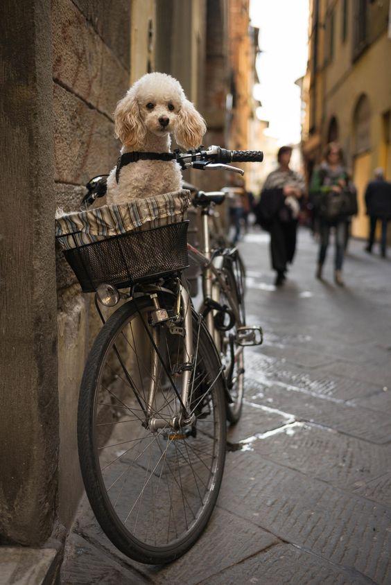 Kos – Kutya