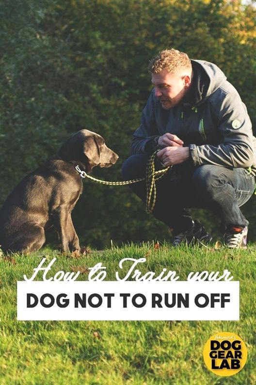 How To Get Your Pup Under Control Dog Training