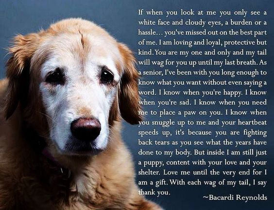 Nice Words That Put A Lump In Your Throat And Perhaps A Tear In Your Eye Unconditional Love Is What They Give And S Dog Poems Senior Dogs Quotes Dog Quotes