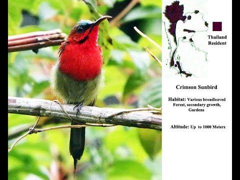 Crimson Sunbird Video In 2021 Bird Photo Location Map Photo
