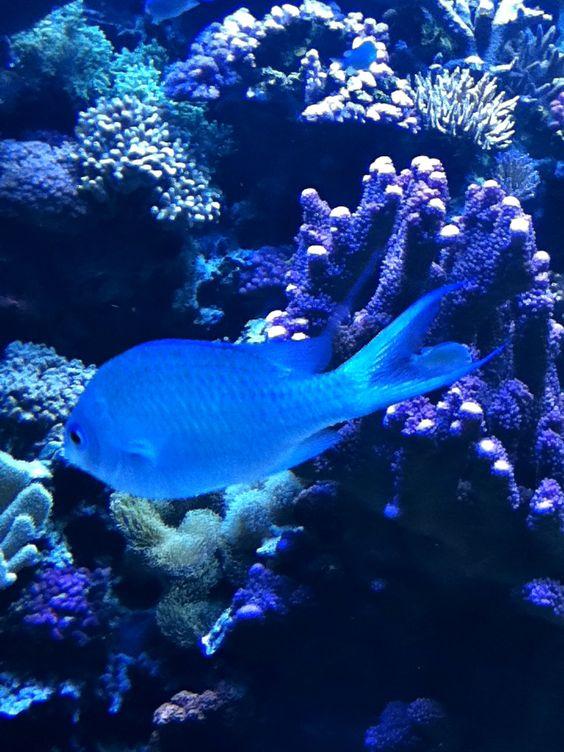 Lovely blue fishyyy