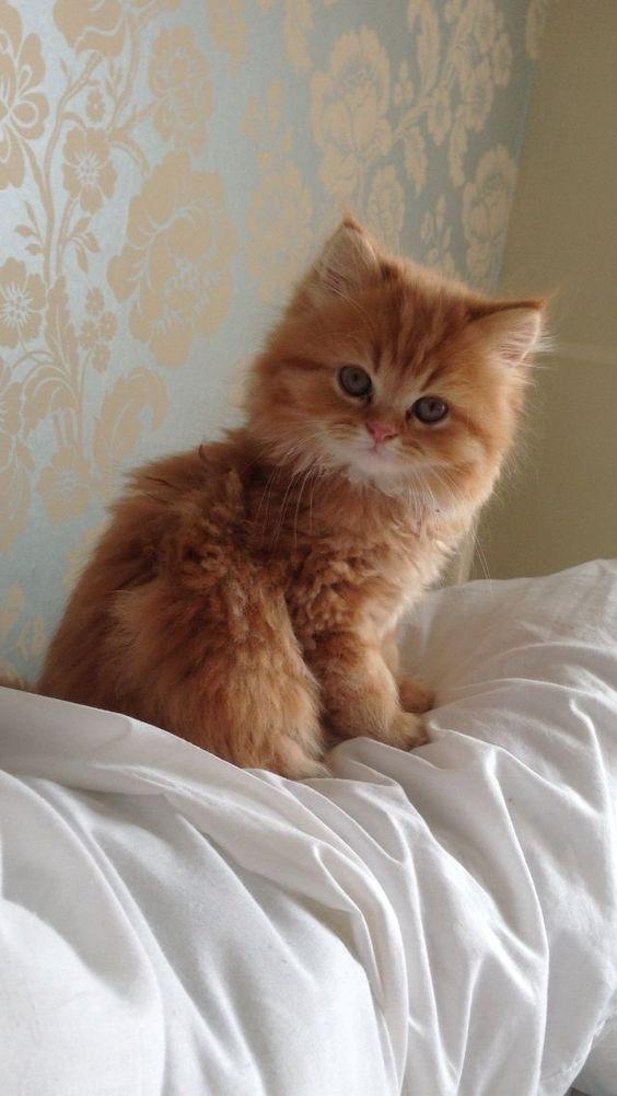 muy peludo ese gatito :3