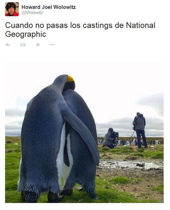 Castings de National Geographic. #humor #risa #graciosas #chistosas #divertidas