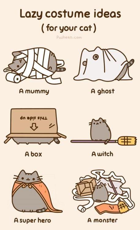 average cat life expectancy