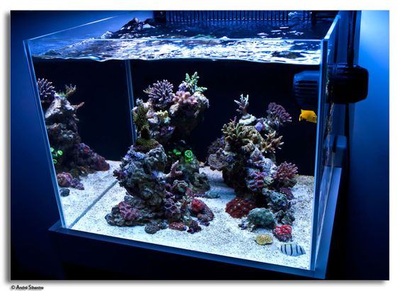 Andre Silvestre Reef Tank Pinterest Aquascaping, A Small and Php