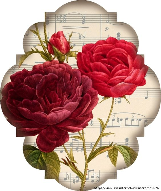 Red rose label: