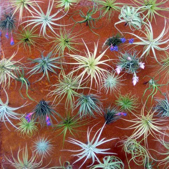 Living garden walls: succulent eco art - San Diego interior decorating | Examiner.com