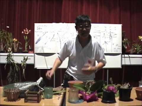 Palestra ministrada durante uma Exposição de Orquídeas em São Paulo/SP em 2009. Na segunda parte, temos identificando uma orquídea e a raiz de uma orquidea. ...