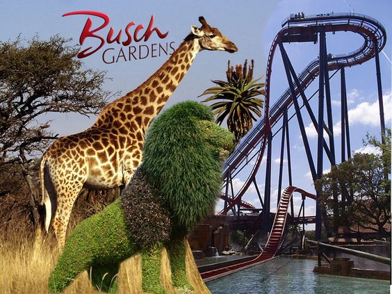 Busch Gardens Tampa Places I Have Been Pinterest
