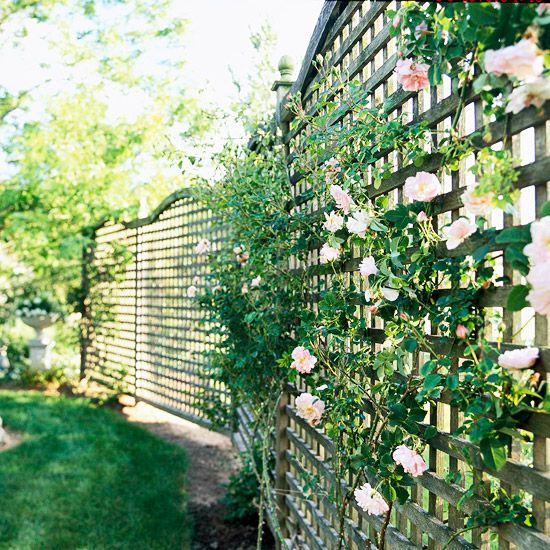 """Privacy Fence: Add Light with Lattice. """"Simply tie the climbing roses to the panels with twist ties. Arched panel tops and finials on support posts provide attractive finishing touches"""""""