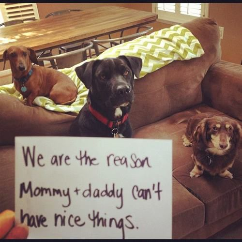 Dog Shaming. This is an adorable blog of shameful naughty dogs. It is hilarious and fun.