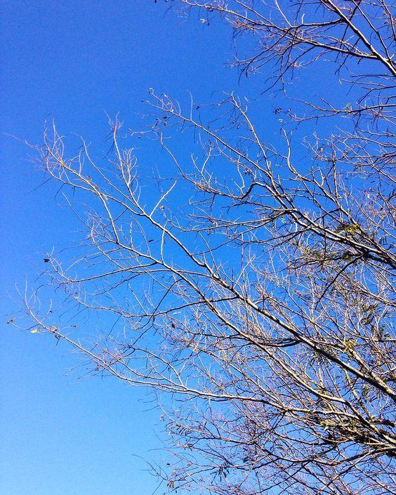 Seja bem vindo inverno! Mas quando é que você vai embora mesmo? Alguém mais com esse sentimento? #malasepanelas #inverno #frio #ceu #azul #picoftheday #bestoftheday #igersrs #canela #serragaucha