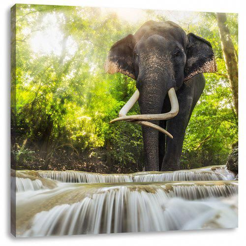 Elephant At The Creek Photographic Art Print On Canvas East Urban Home Size 70cm H X 70cm W Elephant Wallpaper Waterfall Wallpaper Kids Art Wall Frames