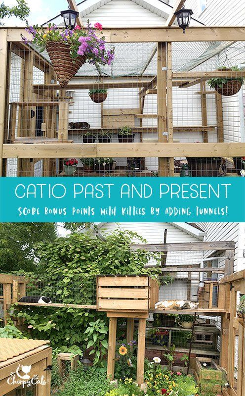 How To Build A Catio Your Cat Will Love Outdoor Cat Enclosure Outdoor Cats Catio
