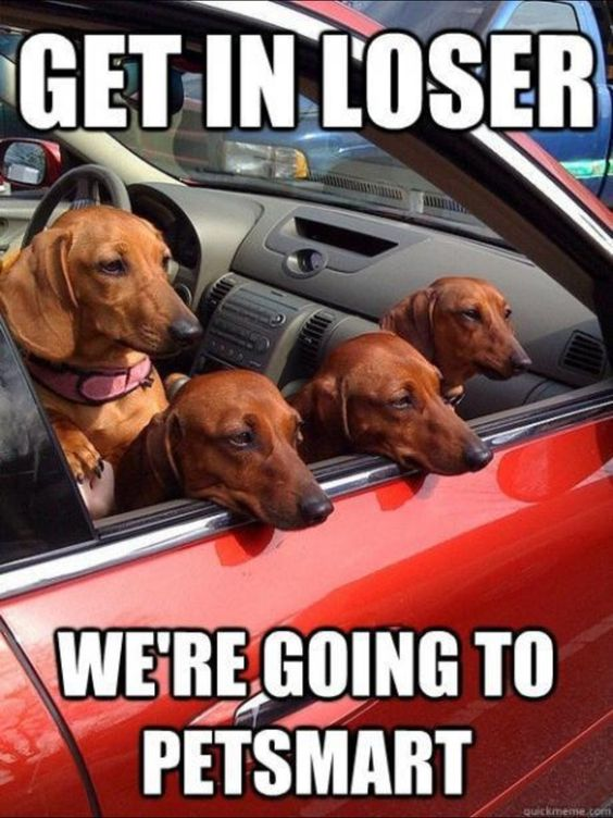 An SO true. Our dog starts his little whine as soon as we turn on the street that leads to Petsmart. :)
