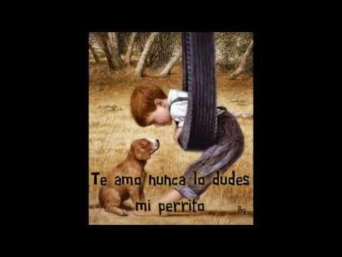 PERRITOS Y GATITOS ♥ AMOR ♥