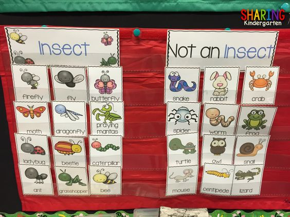 What is an insect? Sorting cards and so much more!