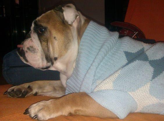 Frida Saenz #BulldogIngles www.bulldogs.es