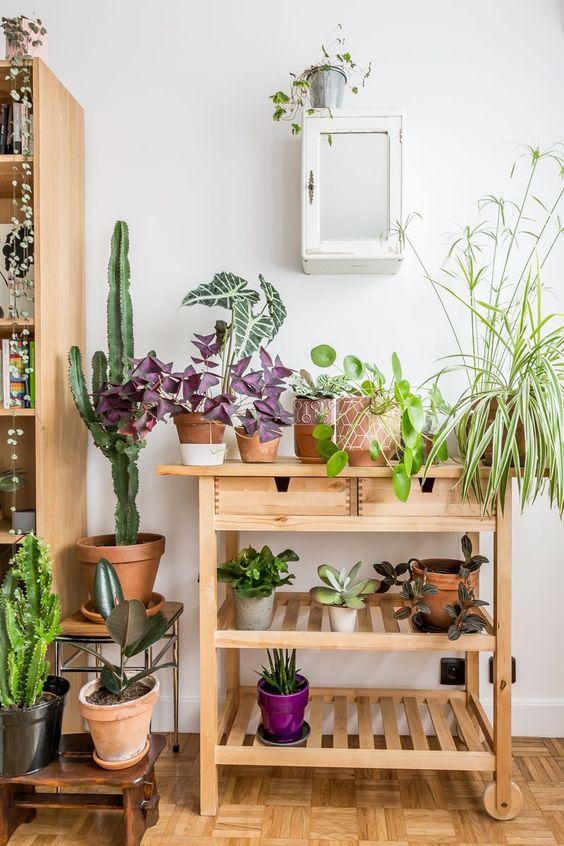 Une caravane de plantes, comme chez un fleuriste