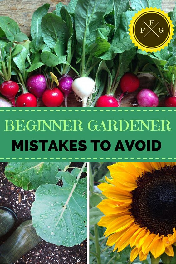 Beginner Gardening Mistakes to Avoid Gardens Gardening and Journals