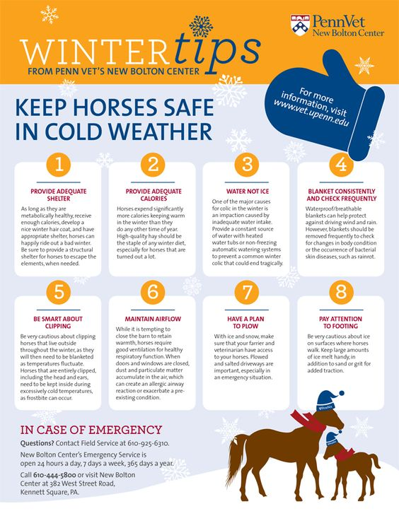 Keep Horses Safe in Cold Weather