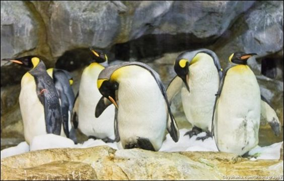 Lãnh địa của những chú chim cánh cụt ngộ nghĩnh - hồ Penguin Parade.