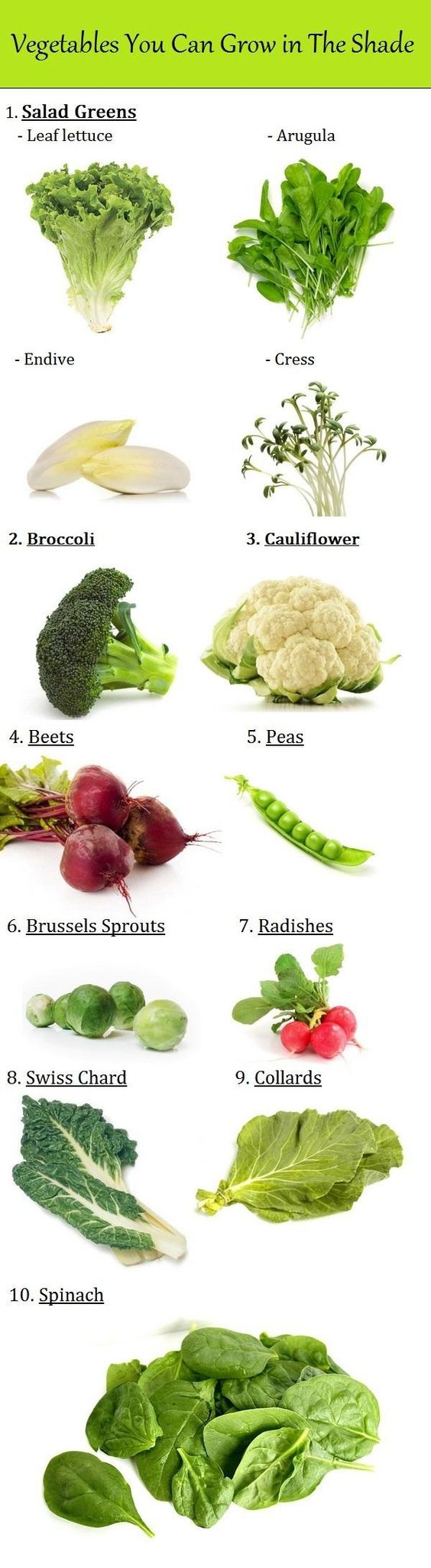 Vegetables You Can Grow In The Shade Gardens Vegetables 640 x 480
