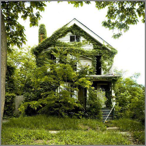 Maison envahie par la végétation