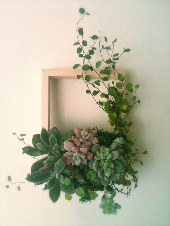 succulents wall decor