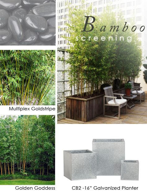 bamboo balcony gardening and balconies on pinterest