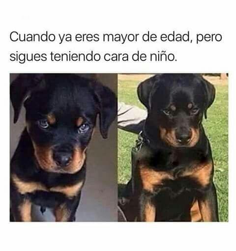 Memes Y Algo Mas Pinterest Abel Pena Funny Animal Memes Animal Memes Funny Animal Pictures