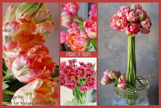 #tulips love for nature and design