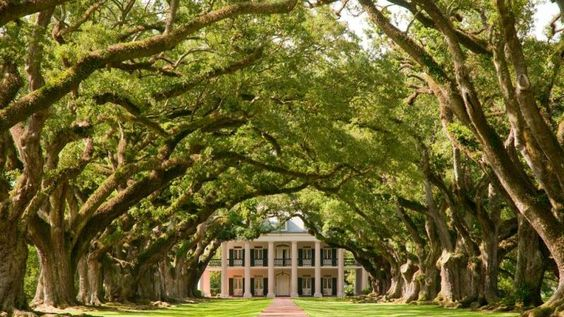 Visit a Plantation in New Orleans - Planned February 2015 - TICKED