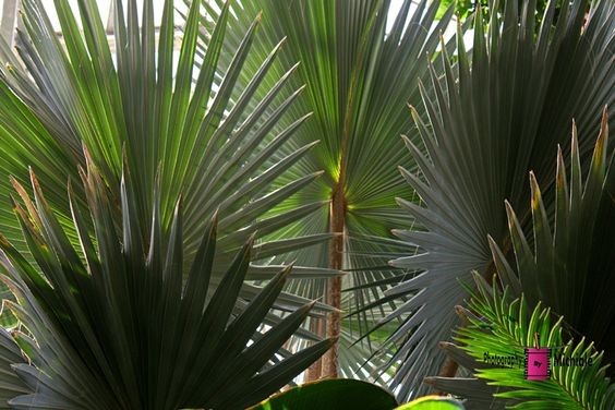 Frolicking Fronds #photography #card #print #canvas #nature  #palm #frond