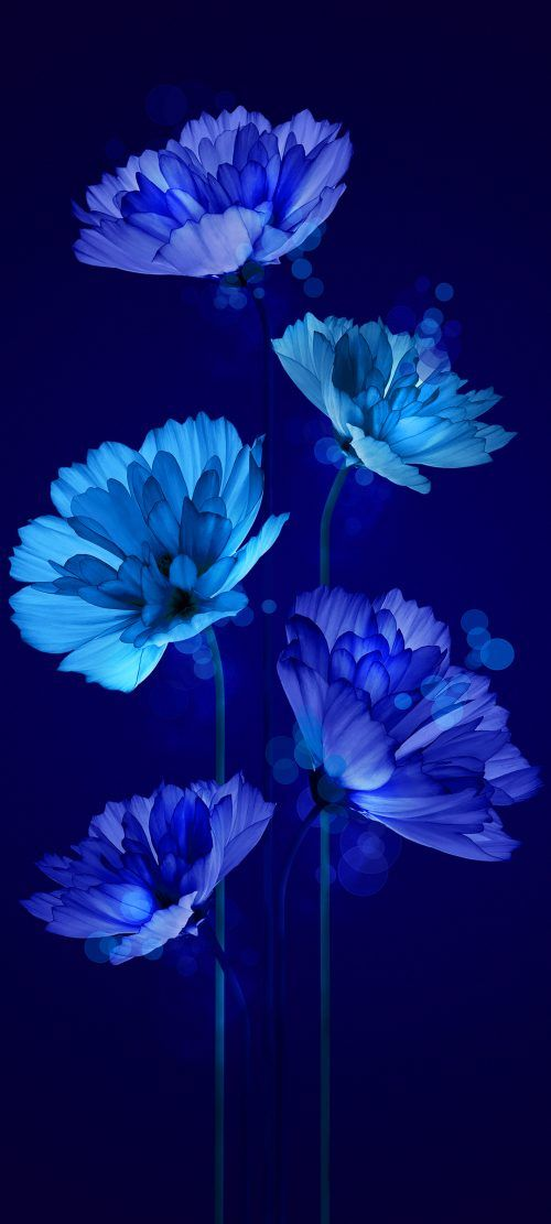 10 Wallpapers That Will Look Perfect On Your Xiaomi Redmi Note 9 Pro 07 Animated D Blue Flower Wallpaper Blue Background Wallpapers Flower Background Iphone