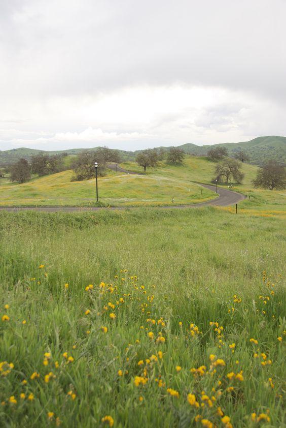 Wildflowers in bloom at Ventana Hills