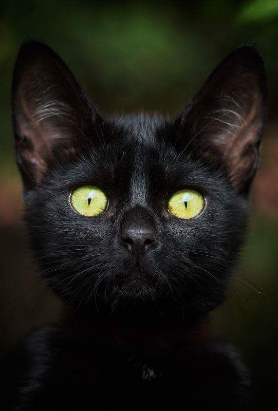 Il Colore E Poesia Dell Anima Nel 2020 Adorabili Gattini Bei Gatti Gatti Pazzi
