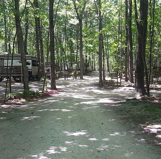 Quiet Woods South Campground Door County Wi Door County Wi Door County Plants