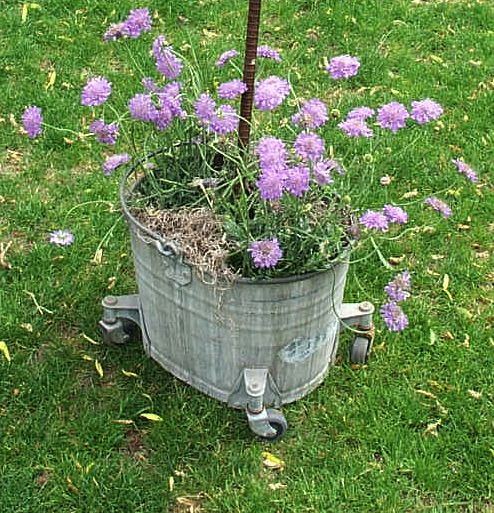 old metal mop bucket planter
