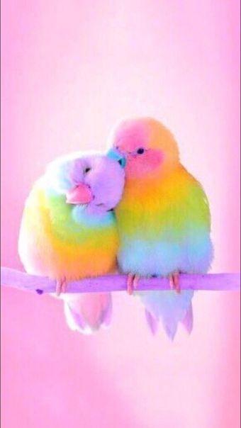 Wallpaper Iphone Android Background Followme Backgrounds Lockscreen Beautiful Animals Beautiful Beautiful Birds Cute Birds