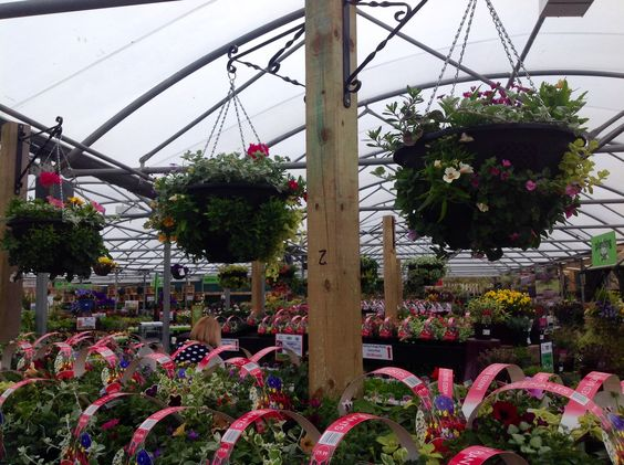 Beautiful hanging baskets created by our team of experts #hanging #basket #summer #colour