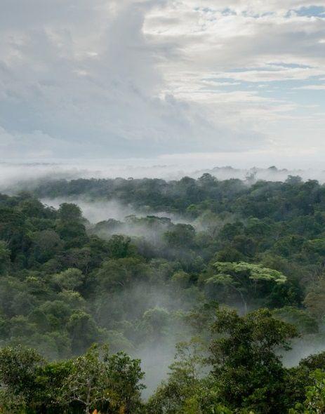 #Forêt dans la #brume pour une atmosphère onirique... #Guyane
